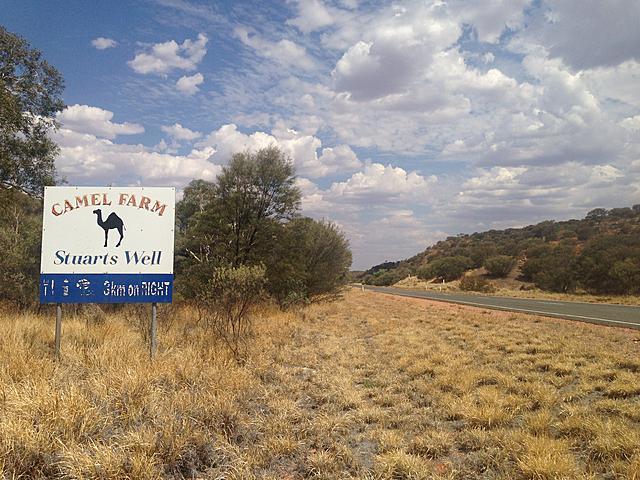流放在荒野中的駱駝農場